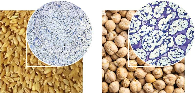 Uncovering how physical structure of dietary fibre underpins its benefits to health