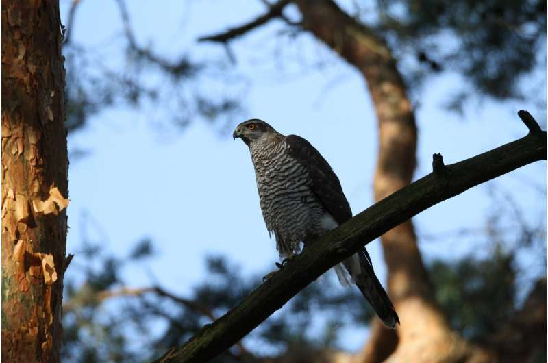 Rodenticides in the environment pose threats to birds of prey