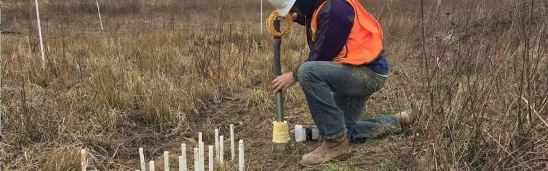 Researchers develop technology allowing researchers to image wetland soil activity in real time