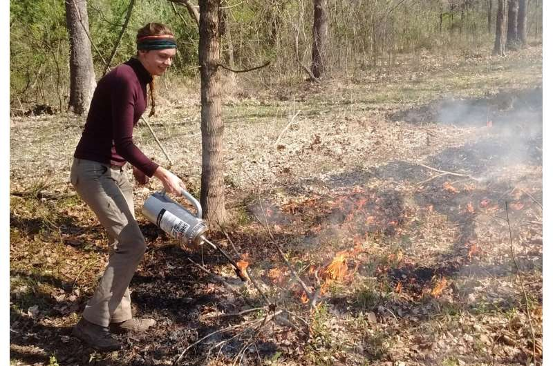 Frequent fire too hot to handle for invasive plants