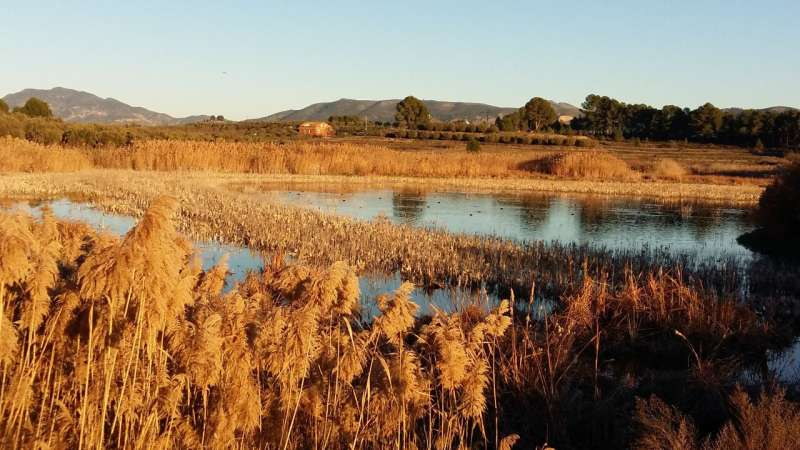 Researchers improve the algorithm that describes the hydrological changes in Mediterranean wetlands