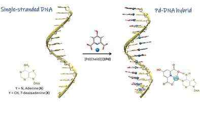 Single-stranded DNA as supramolecular template for highly organized palladium nanowires