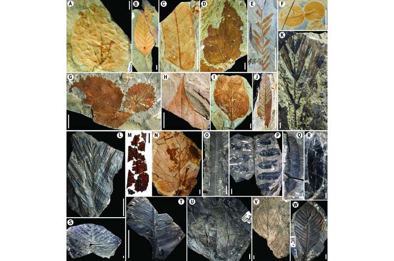 Flowers! How the Chicxulub impactor gave rise to modern rainforests