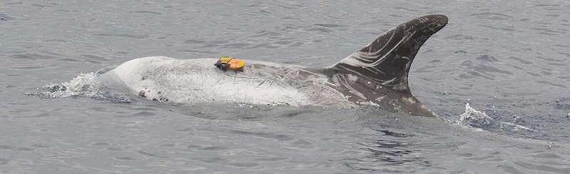 Whales dive deep for profitable prey