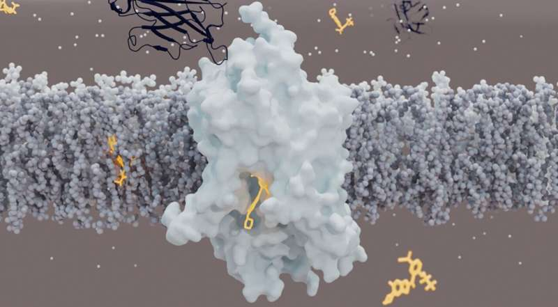 Structural biology opens new perspectives for treating psychiatric disorders