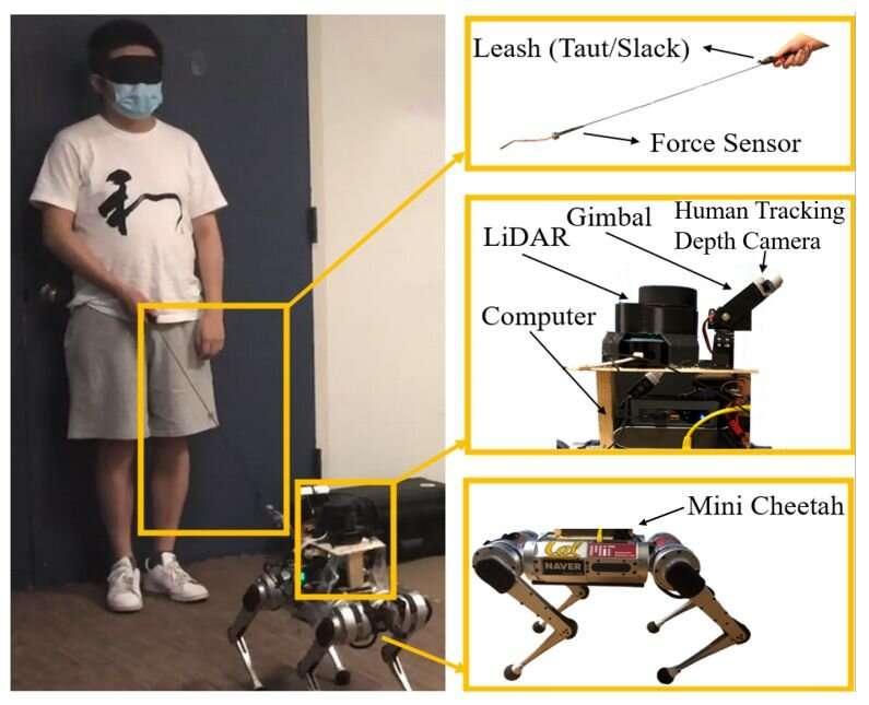 Un chien-guide robot équipé d'un laser pour guider les aveugles