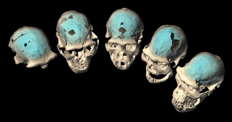 Modern human brain originated in Africa around 1.7 million years ago