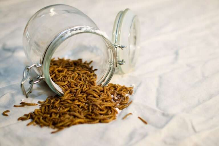 Natural treatment based on flour made with mealworms prevents diabetes