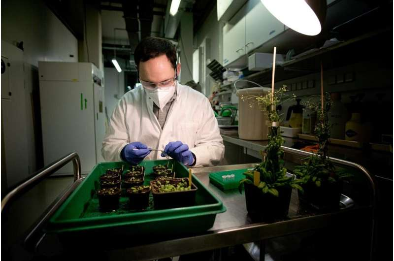 Researchers solve riddle of plant immune system