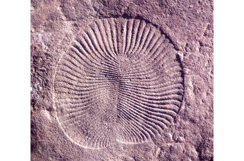 Cercetările arată că suntem surprinzător de asemănători cu primele animale de pe Pământ