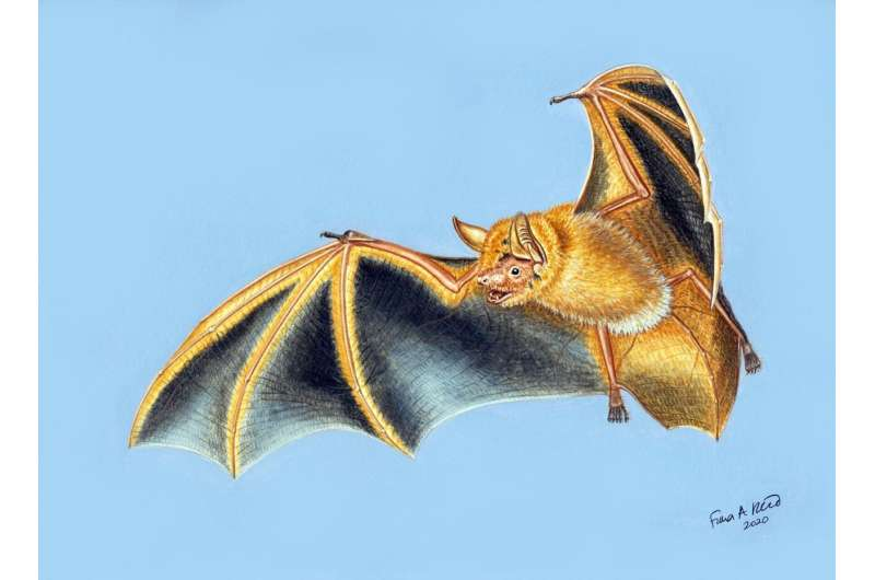 Scientists discover new 'spectacular' bat from West Africa