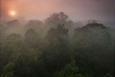 A 50% rise in the level of CO2 could reduce rainfall in the Amazon more than deforestation