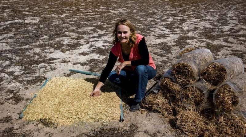 Un problema sucio: los científicos luchan por arreglar los suelos del mundo