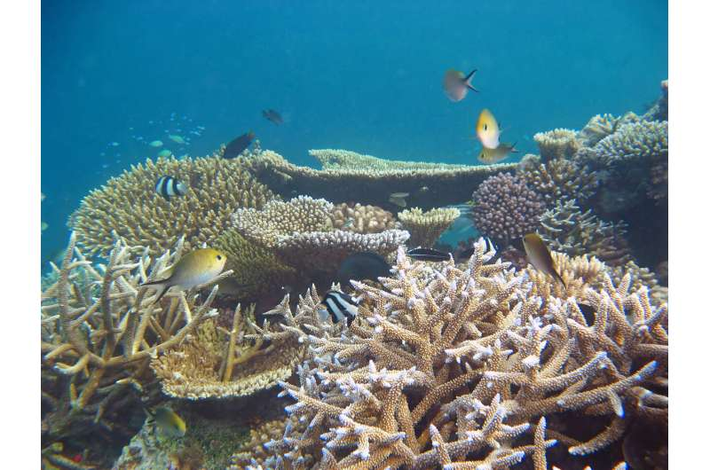A future ocean that is too warm for corals might have half as many fish species