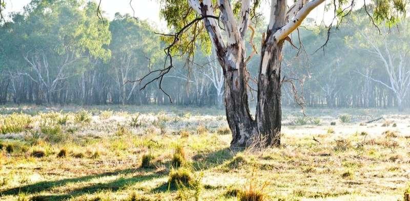 Un árbol solitario facilita que las aves y las abejas naveguen por las tierras de cultivo, como un trampolín entre hábitats