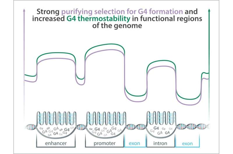A new class of functional elements in the human genome?