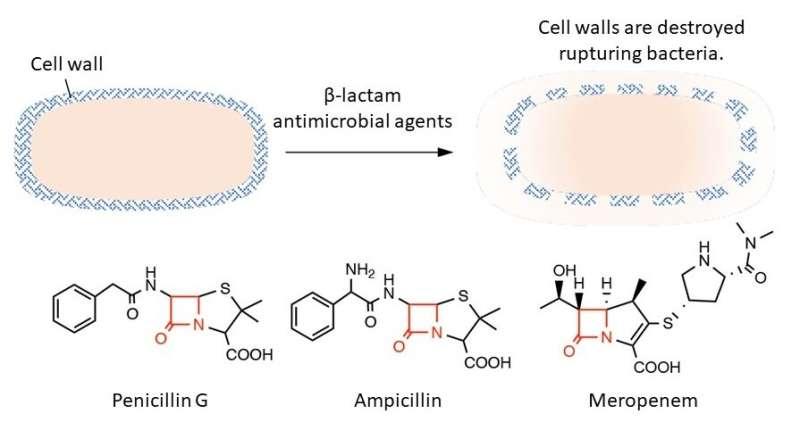 A new culprit in antibacterial resistance: cysteine persulfide