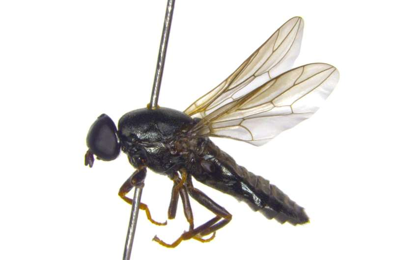 A novel fly species described from Finland