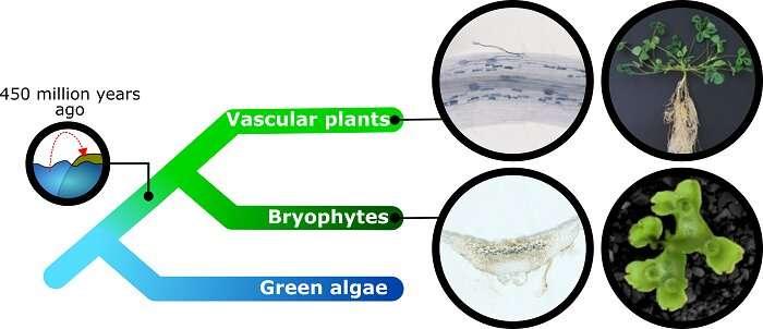 Una asociación planta-hongos en el origen de la vegetación terrestre