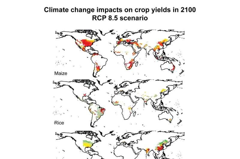 Una cuarta parte de las cosechas mundiales en riesgo si la agricultura no se adapta al cambio climático