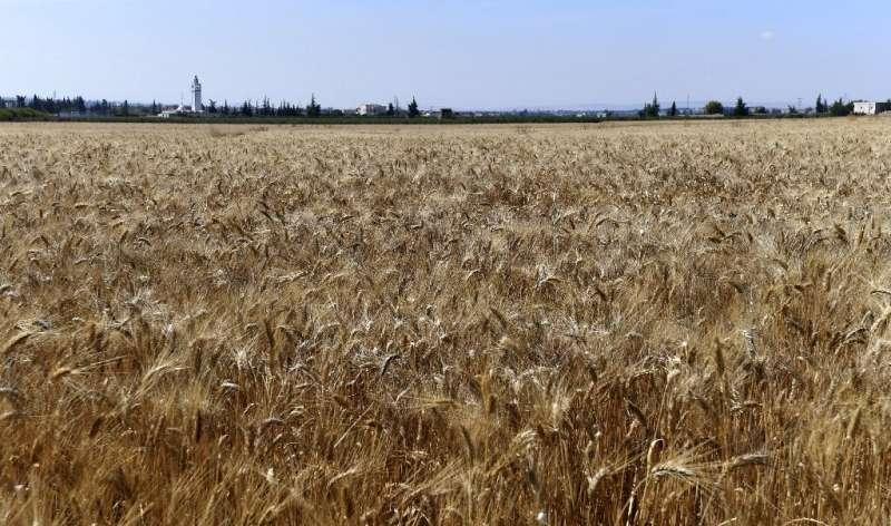 'El retorno a las semillas locales o nativas es una de las condiciones necesarias para alcanzar la soberanía alimentaria', un investigador en po agrícola