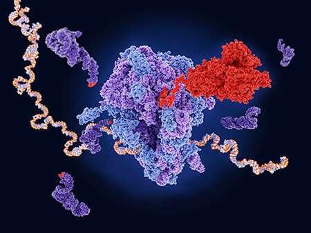 A small molecule induces readthrough of cystic fibrosis CFTR nonsense mutations