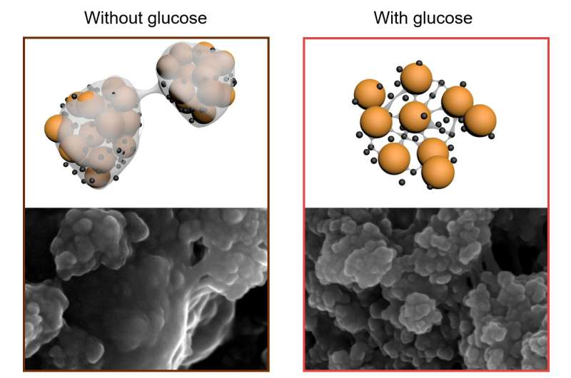 A spoonful of sugar opens a path to longer lasting lithium sulfur batteries