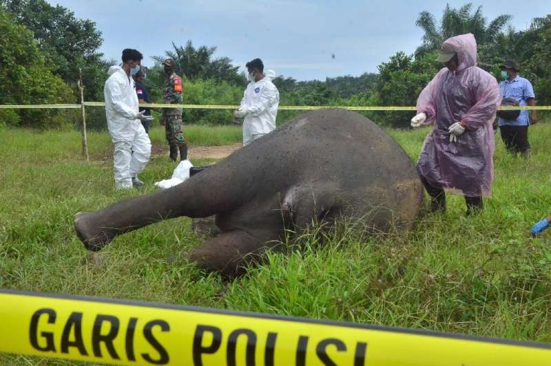 A subsequent autopsy found that the elephant had also been poisoned