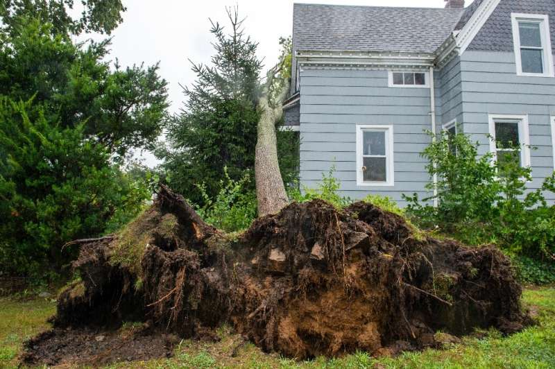 A tree uprooted by Tropical Storm Henri in New London, Connecticut on August 22, 2021