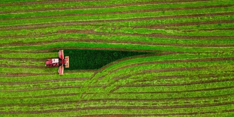 Las tierras de cultivo abandonadas deberían producir biocombustibles