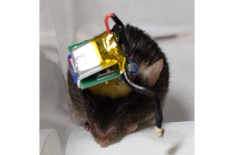 'A Bluetooth mouse'--you can wirelessly read a mouse's mind