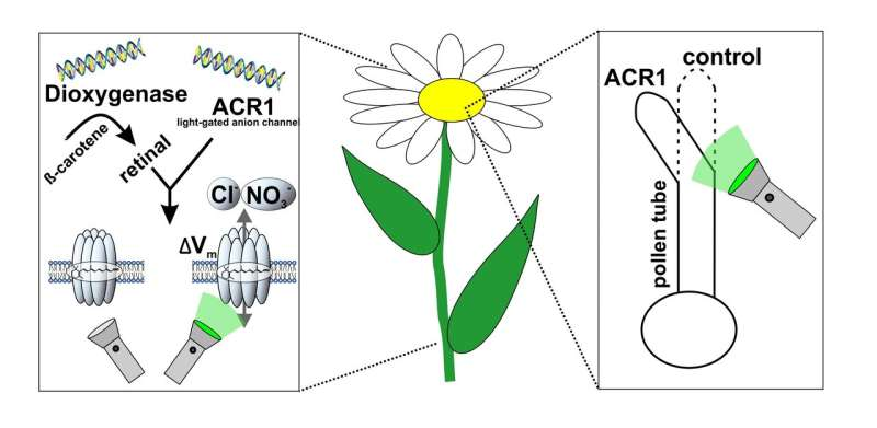 A boost for plant research