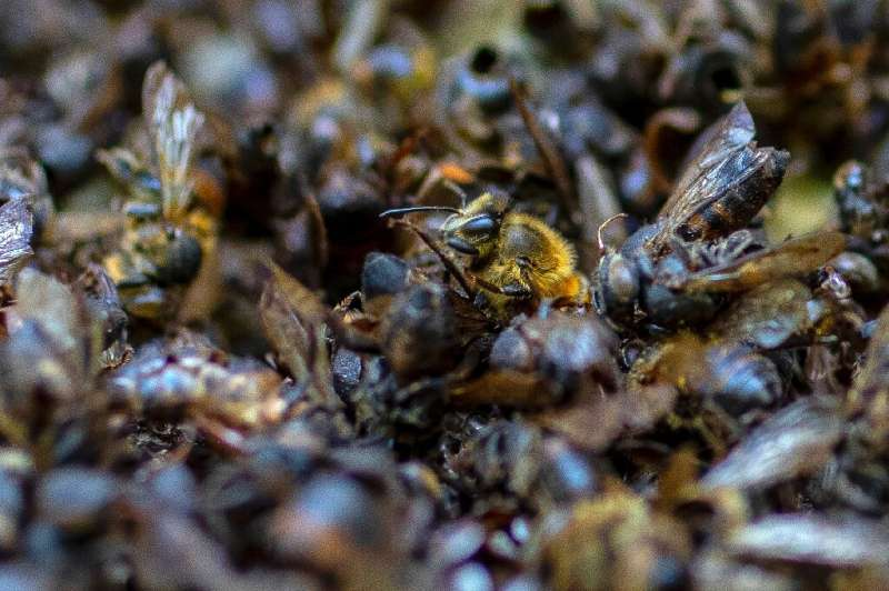 About 1.4 billion jobs and three-quarters of all crops around the world, according to a 2016 study, depend on pollinators, mainl
