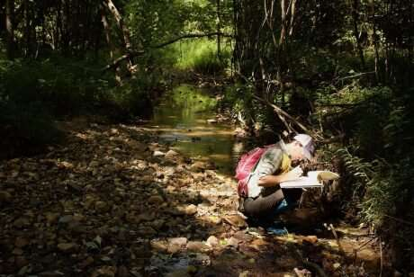 Abundant and stable rocks are critical egg-laying habitat for insects in restored streams
