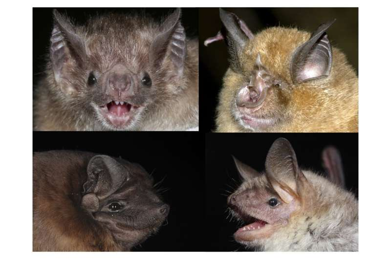Accurate aging of wild animals thanks to first epigenetic clock for bats