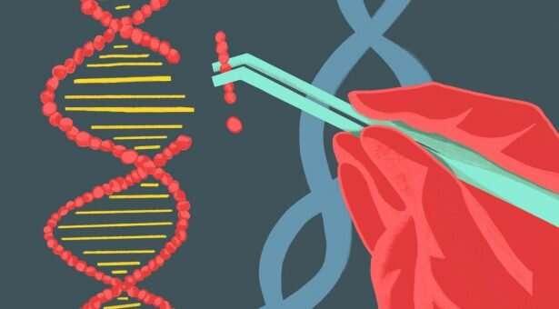 A CRISPR picture emerges on European Union GMO directive