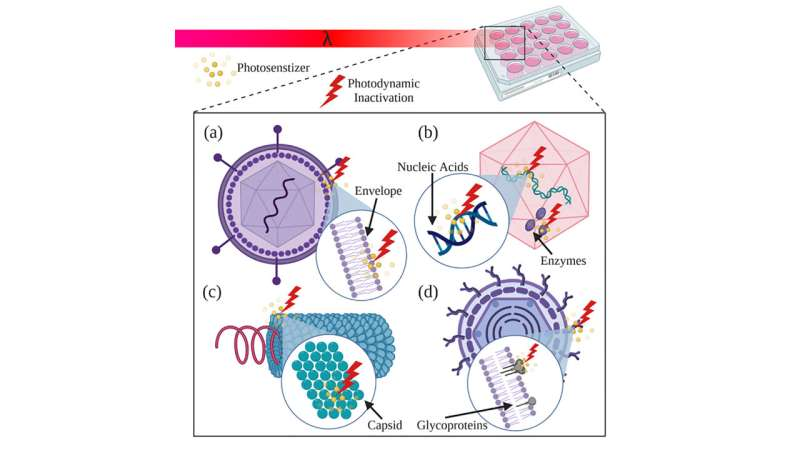 Adding antibodies to enhance photodynamic therapy for viral and bacterial disease