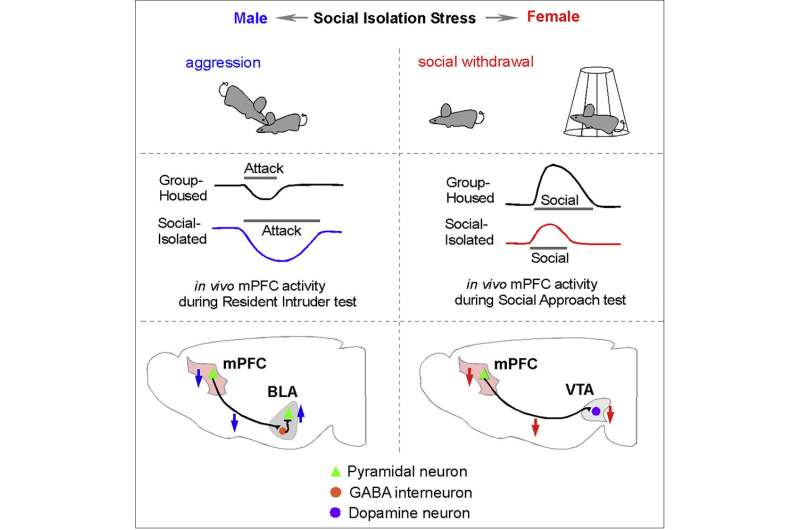 Adolescents respond to chronic social isolation stress in sex-specific ways