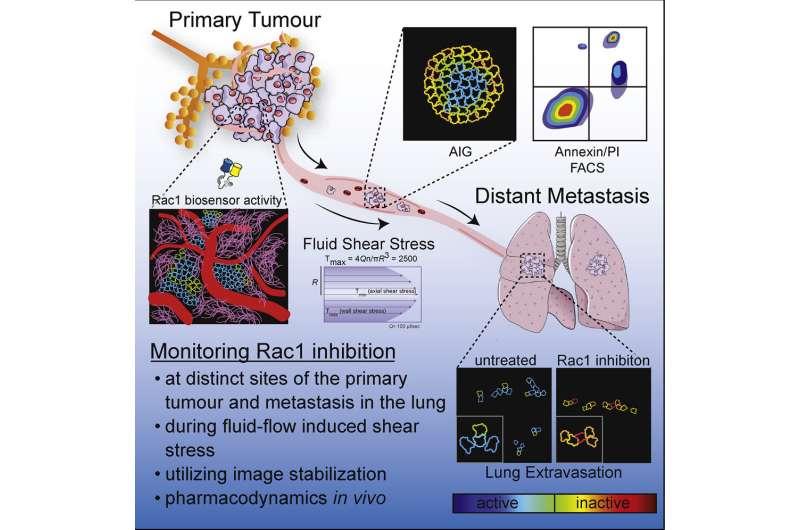 Advanced imaging reveals breast cancer's Achilles' heel