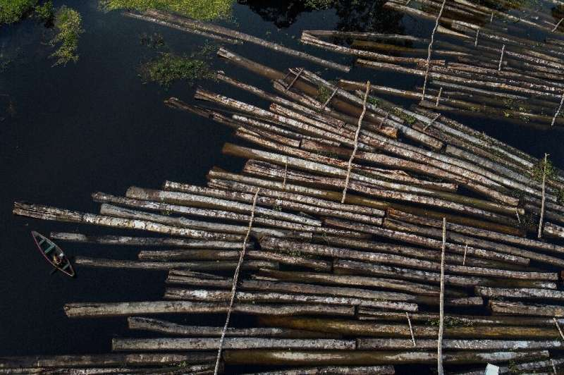 Aerial view of logs of wood seized by the Amazon Military Police at the Manacapuru River in Manacupuru, Amazonas State, Brazil o