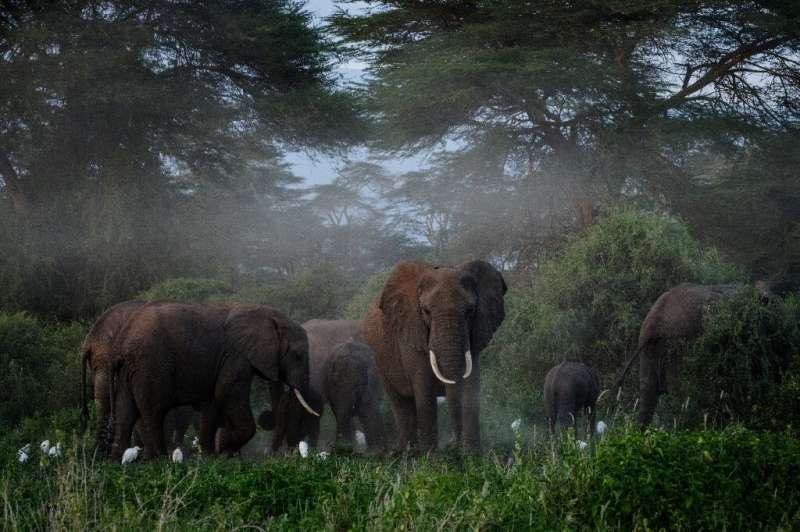 African elephants comminicate by 'rumbles' that are at such low frequency they are almost inaudible to the human ear
