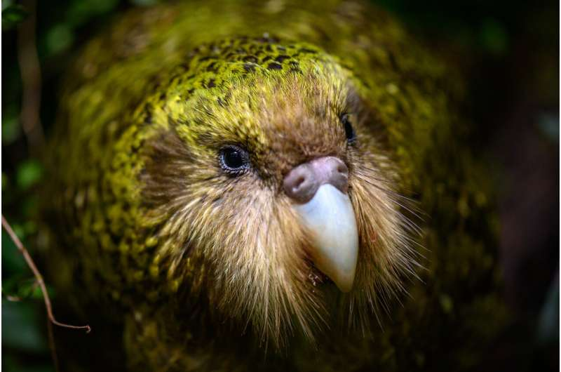 After 10,000 years of inbreeding, endangered flightless parrots from New Zealand are in surprisingly good genetic health