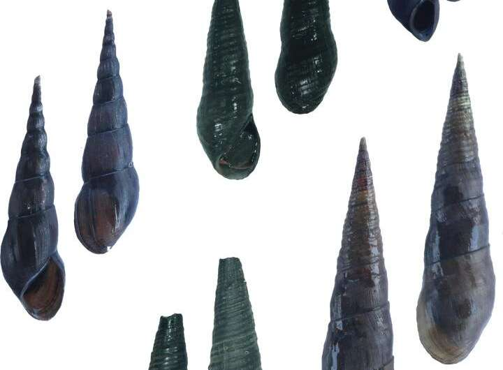 Agents of food-borne zoonoses confirmed to parasitise newly-recorded in Thailand snails