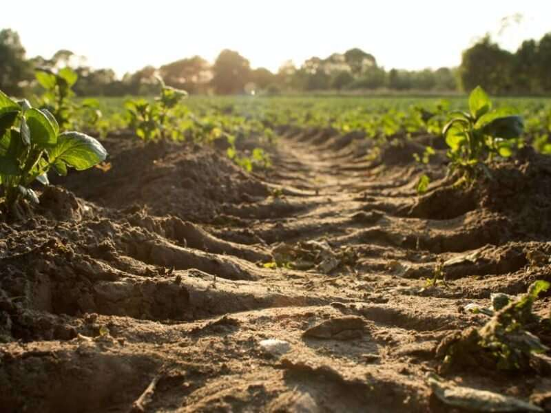 A Global Look at Surface Soil Organic Carbon