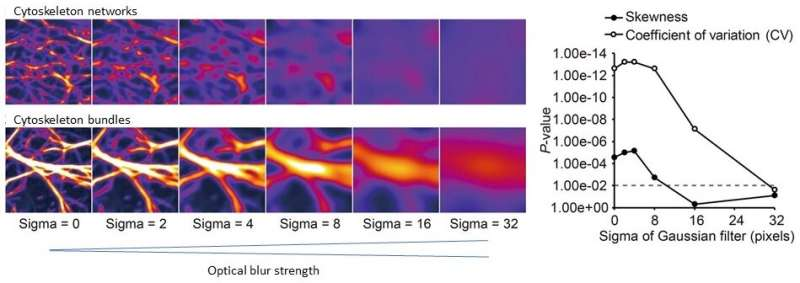 A highly sensitive technique for measuring the state of a cytoskeleton