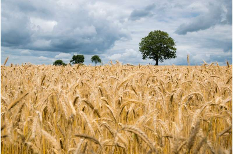 AI weather forecasting for smart farms