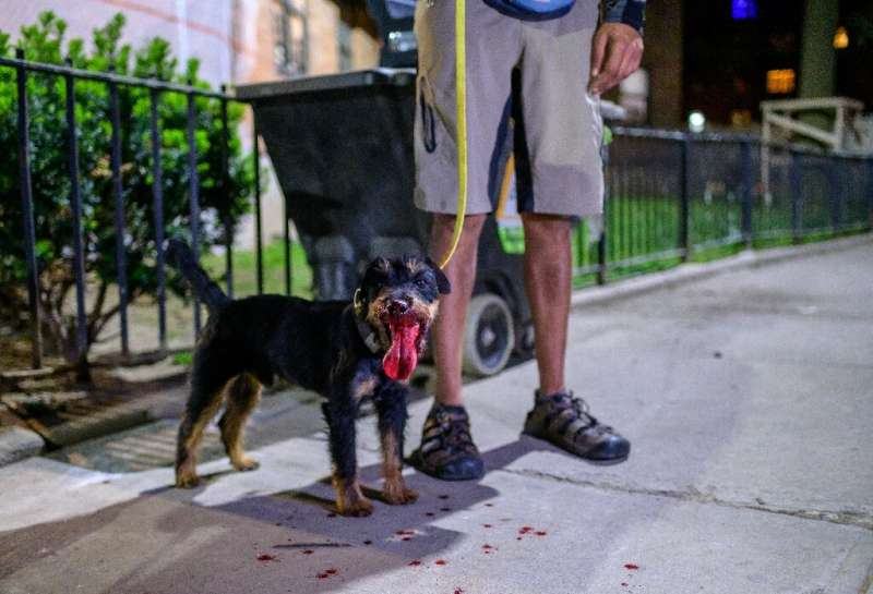 Alex Middleton stands with Rommel the Jagdterrier after it killed a rat in lower Manhattan on May 14, 2021 in New York City