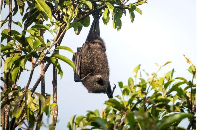 'Alien' plants could pose risk to fruit bats