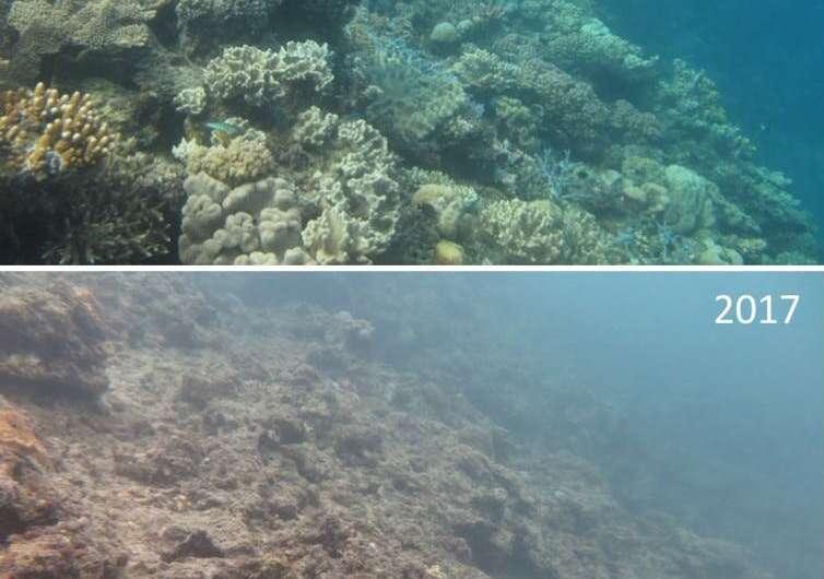 Σχεδόν 60 είδη κοραλλιών γύρω από το νησί Lizard λείπουν - και η κρίση εξαφάνισης του Great Barrier Reef θα μπορούσε να είναι η επόμενη.