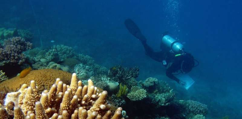 Almost 60 coral species around Lizard Island are 'missing' – and a Great Barrier Reef extinction crisis could be next